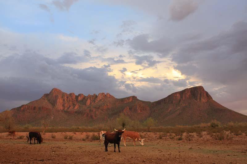 White Stallion Ranch Scenery