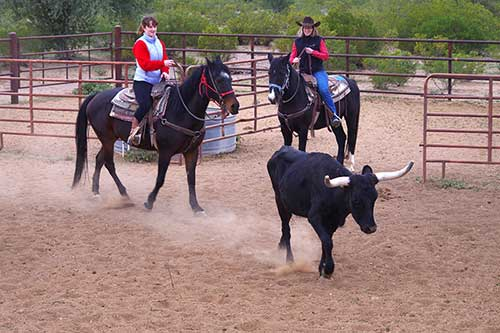 White Stallion Ranch Cattle Sorting