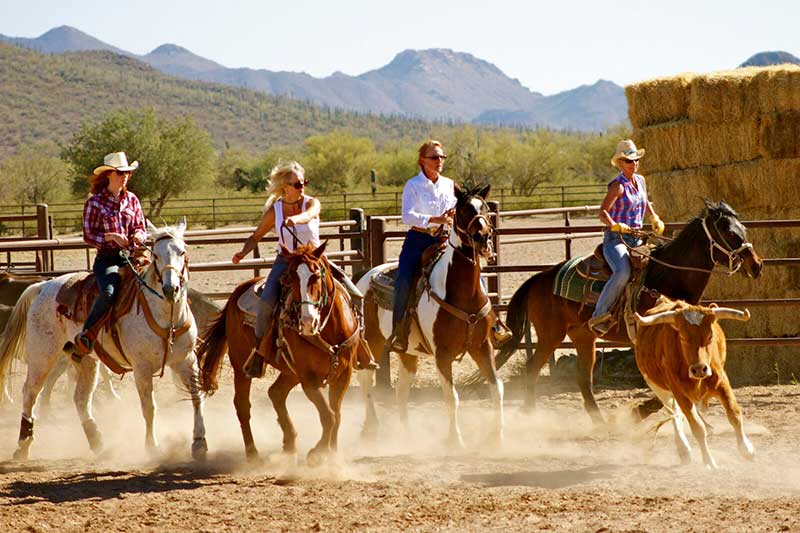 White Stallion Ranch Team Penning