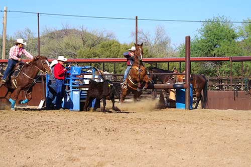 White Stallion Ranch Rodeo