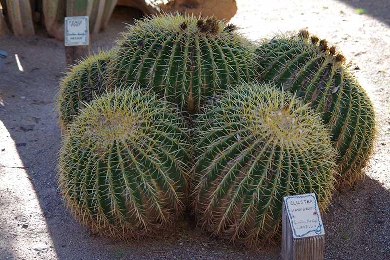 White Stallion Ranch Cactus Garden
