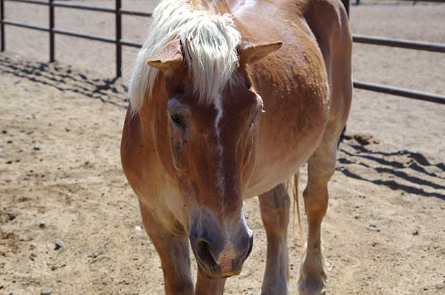 Moonshine - Horse of the Month