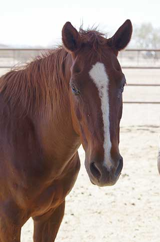 Horse of the Month - Buster