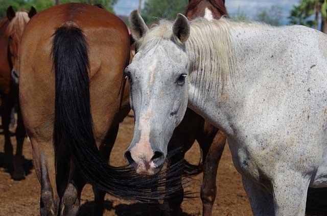 Horse of the Month - Watt